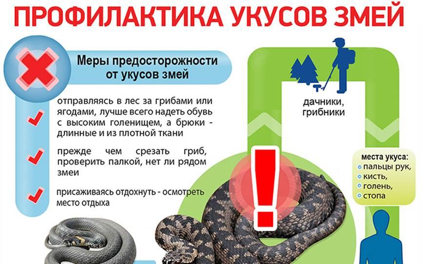 О первой помощи ребенку при укусе змеи рассказывает врач-педиатр