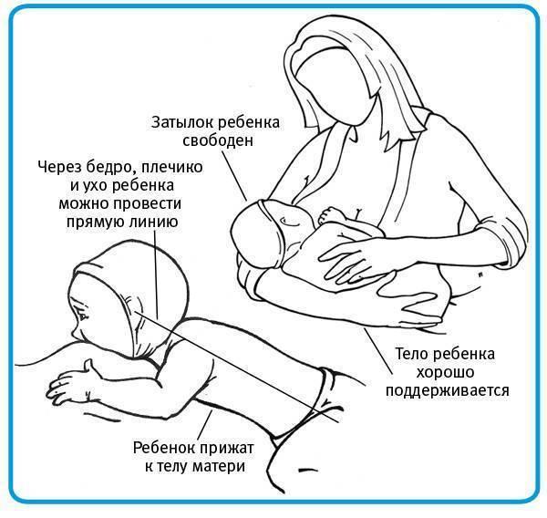 Как перетягивают грудное молоко для прекращения лактации