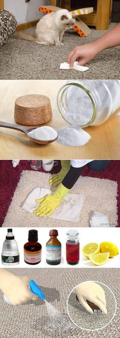 Как очистить диван от мочи, убрать пятна и запах в домашних условиях