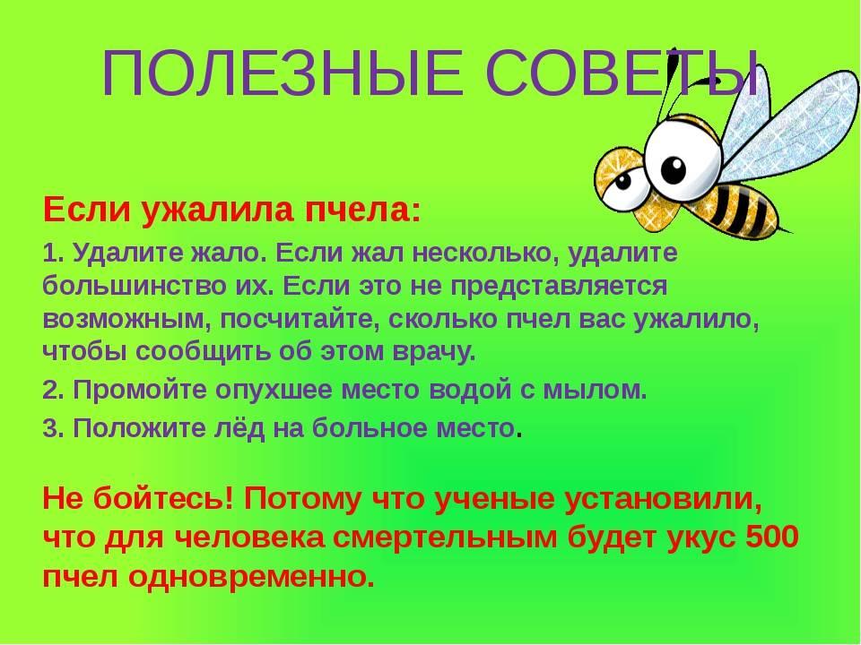 Почему одних кусают, адругих нет? врач объясняет, каких белорусских насекомых нужно остерегаться
