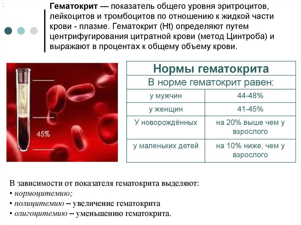 Mchc в анализе крови