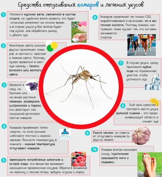 Укусы комаров - лечение, как снять отек, как помочь ребенку