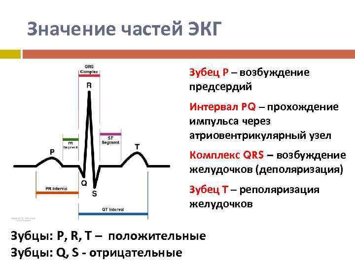 Основные элементы экг: что содержит график кардиограммы