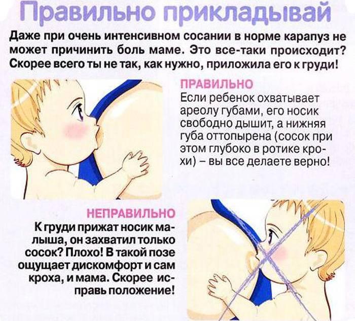 Ребенок кусает грудь – как отучить, что делать при кормлении