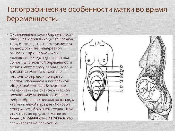 Что ощущает женщина на ранних сроках беременности | диаметр плодного яйца