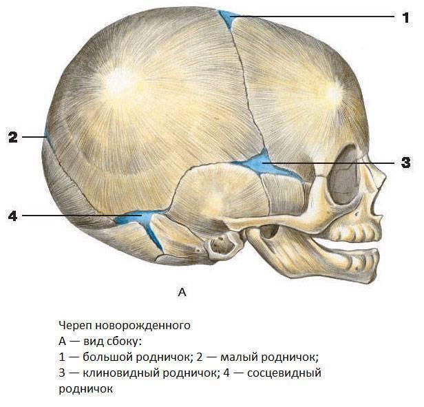 Преждевременное закрытие черепных швов у детей