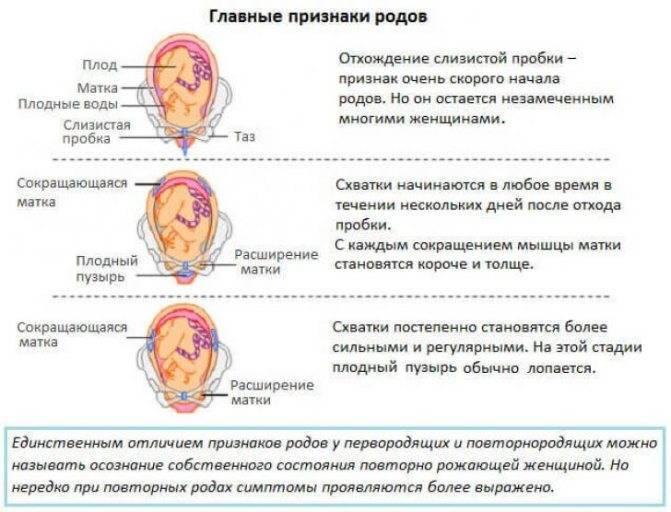 37 неделя беременности: развитие малыша на 37 неделе беременности.