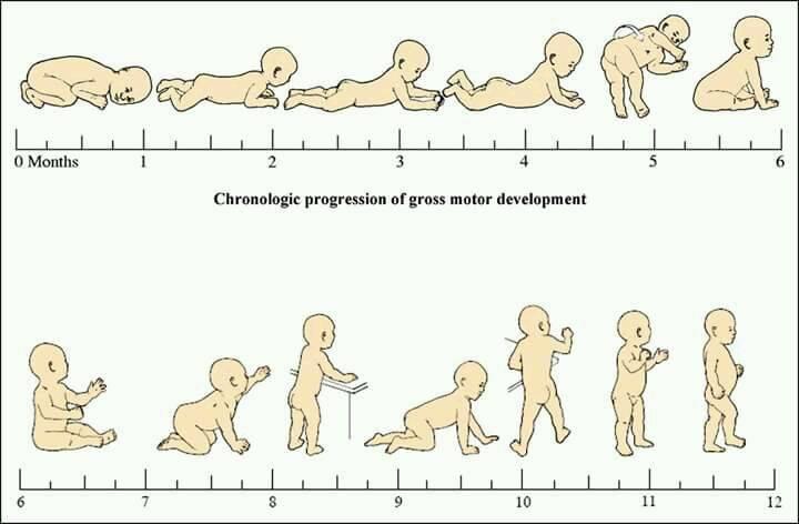 Развитие ребенка по месяцам до 1 года: таблица роста и веса, отличия в развитии мальчиков и девочек.
