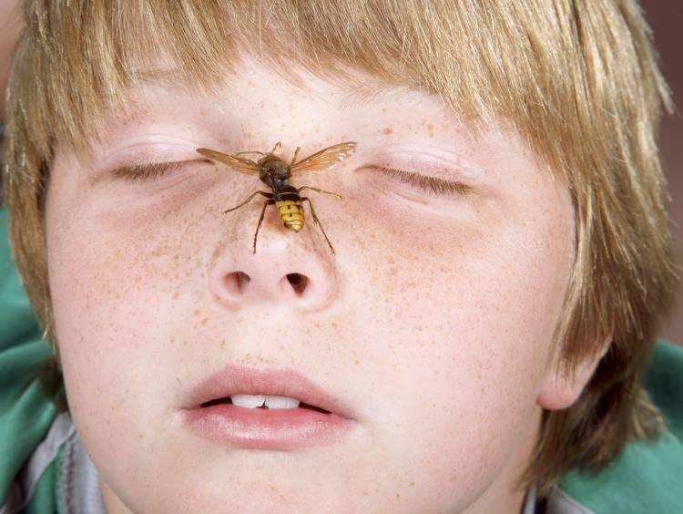 Аллергия на укусы комаров у детей и взрослых - myallergo