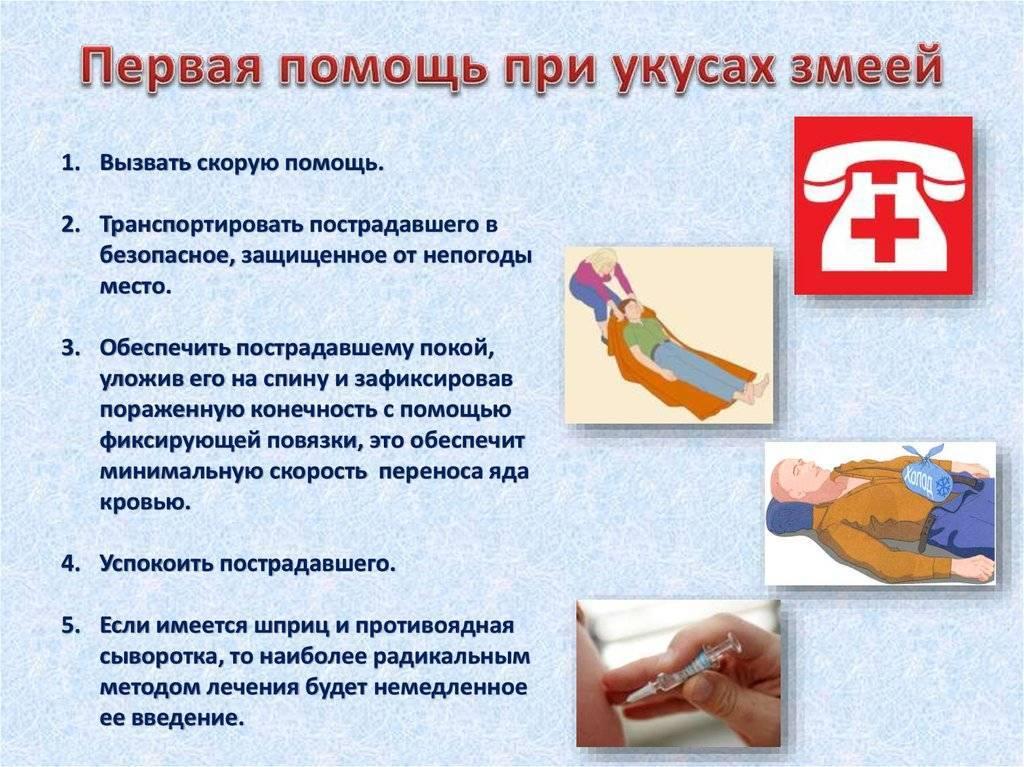 Первая помощь при укусе змеи:ликбез от дилетанта estimata
