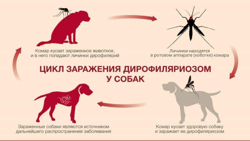 Аллерия на укусы комаров у детей и взрослых: симптомы (фото), как вылечить аллергическую реакцию