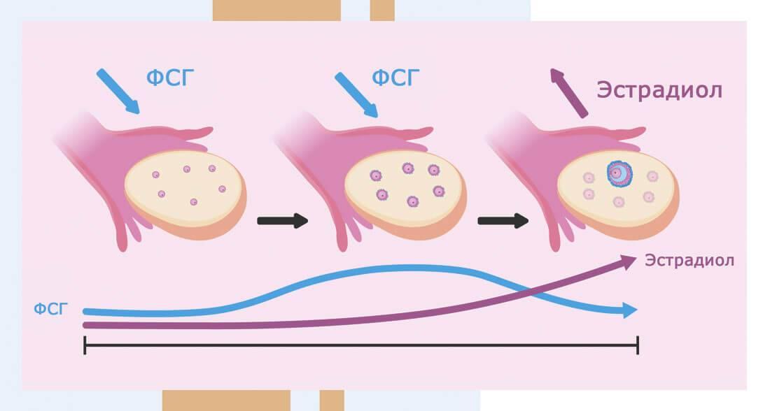 Как нужно вести себя после переноса эмбрионов - статья репродуктивного центра «за рождение»
