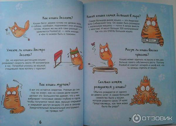 Почему кошки урчат: специфика, причины, как определить желания
