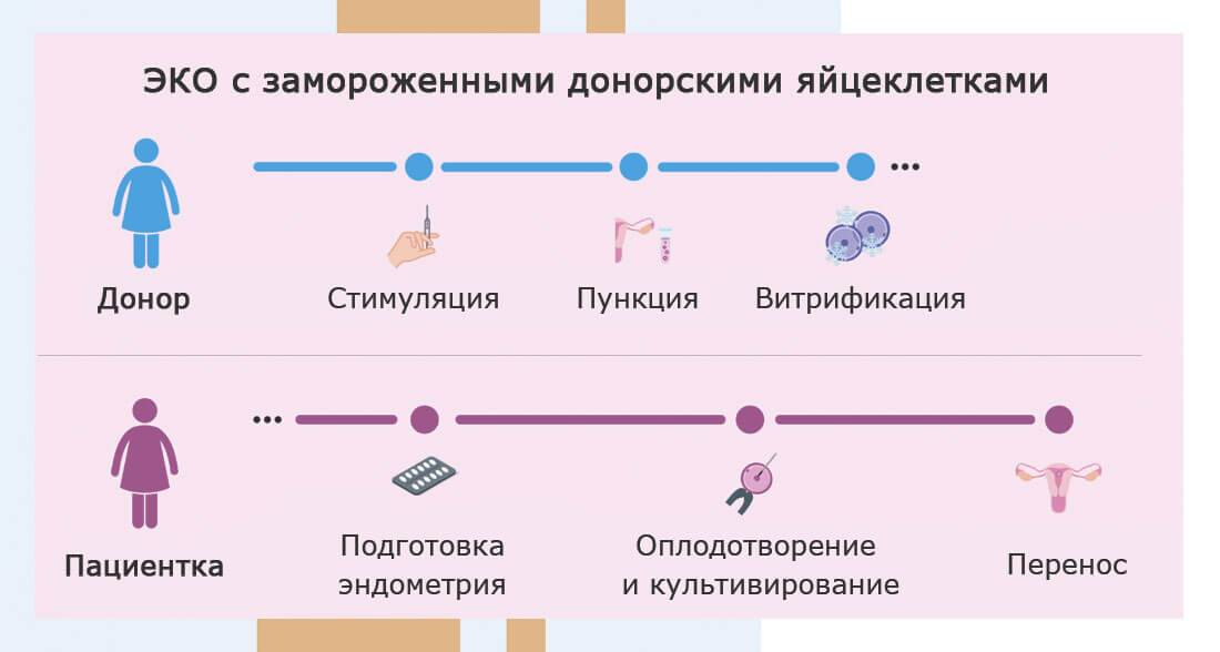 Этапы эко: оценка качества эмбрионов