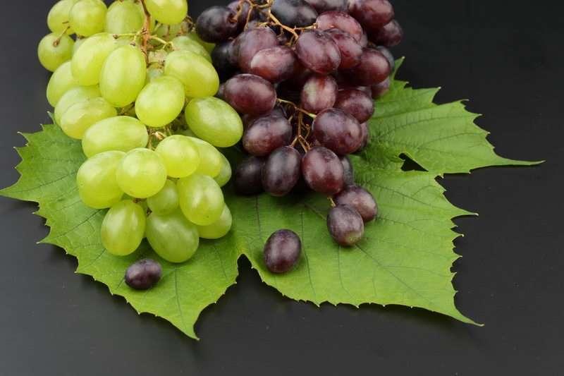 Можно ли употреблять виноград при грудном вскармливании