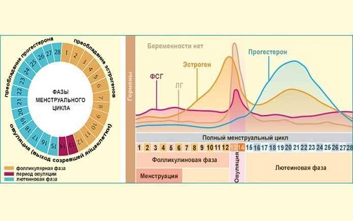 Менструальный цикл – маркер здоровья?
