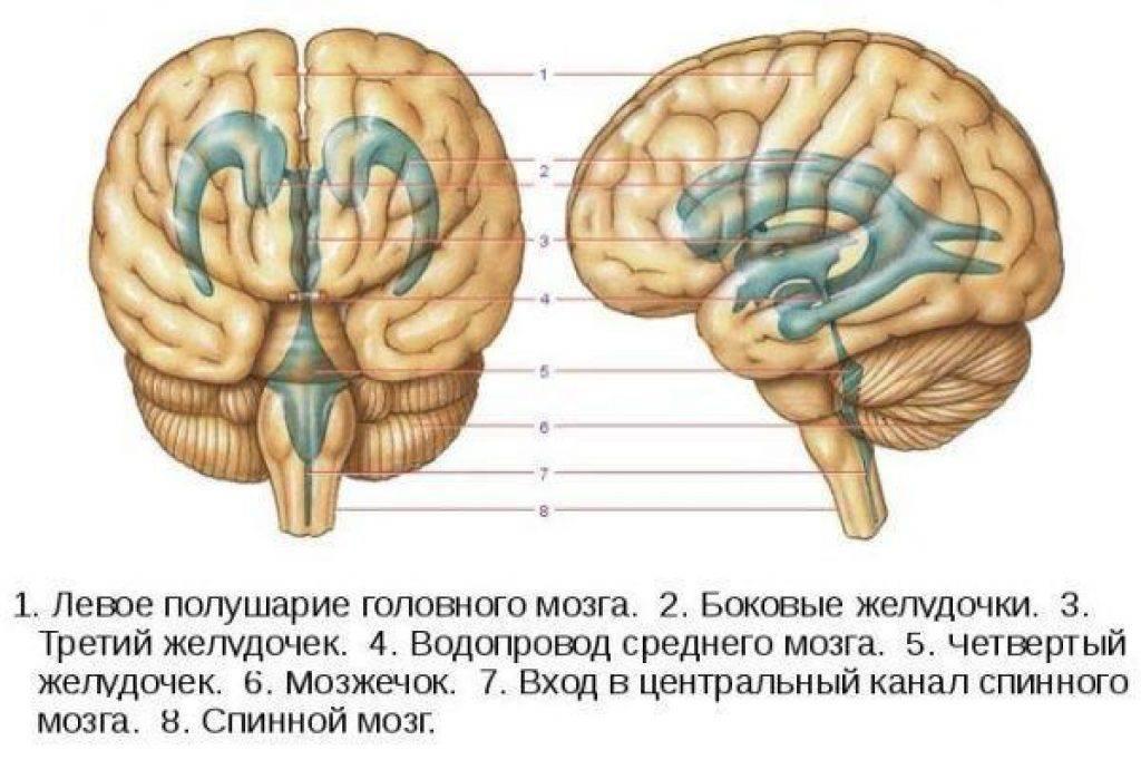 Какзамедлить возрастные изменения мозга?