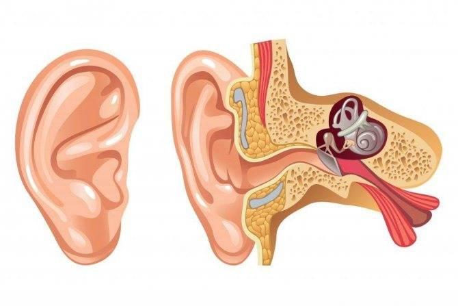 Заложенность уха у взрослых и детей