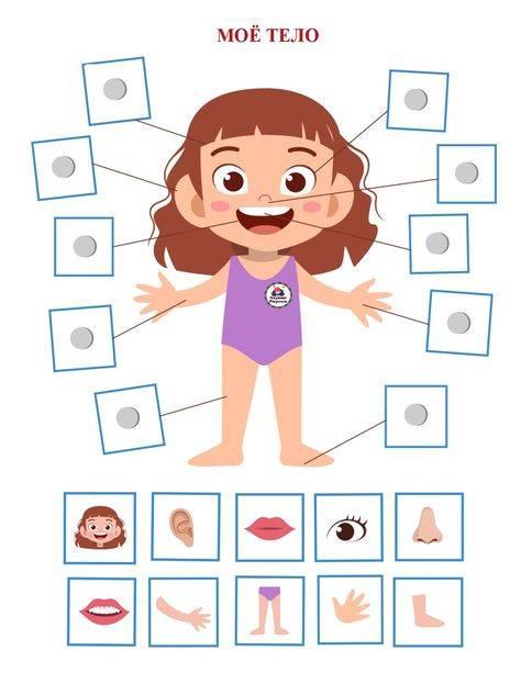 Конспект од «строение тела человека» для дошкольников с презентацией. воспитателям детских садов, школьным учителям и педагогам - маам.ру