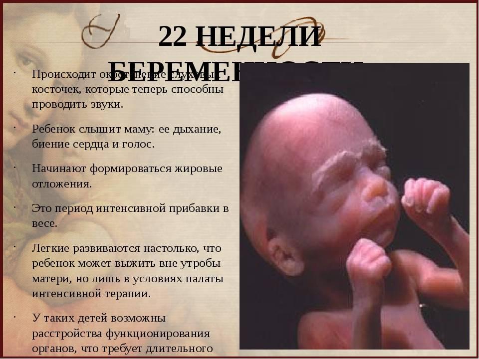 22 неделя беременности: изменения в организме матери и малыша, ощущения, медицинские обследования, питание и режим, факторы риска и опасности. календарь беременности по неделям.