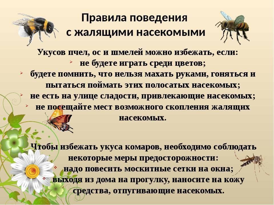 Первая помощь детям при укусах насекомых