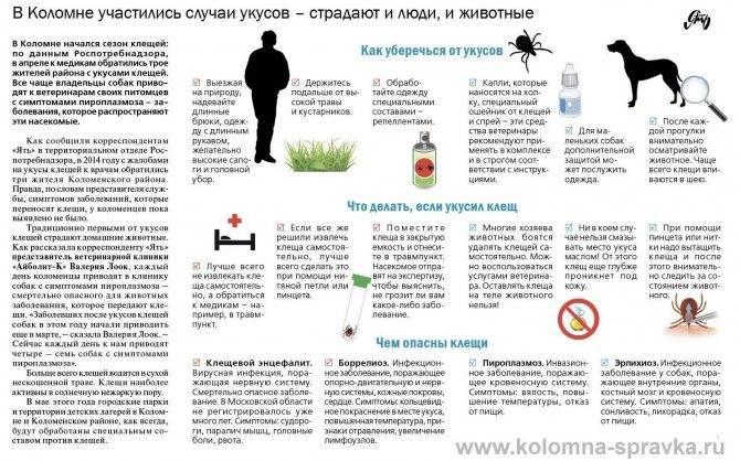 Что делать, если покусали мошки, комары или осы