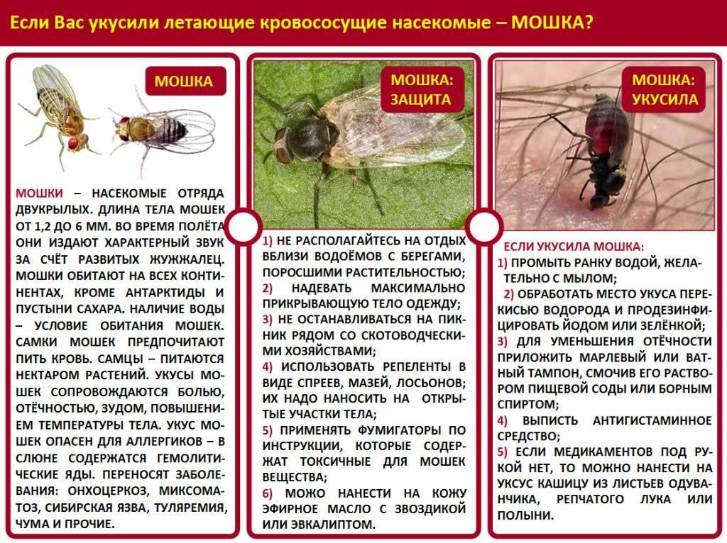 Первая помощь детям при укусах насекомых | служба дезинсекции дезстанция
