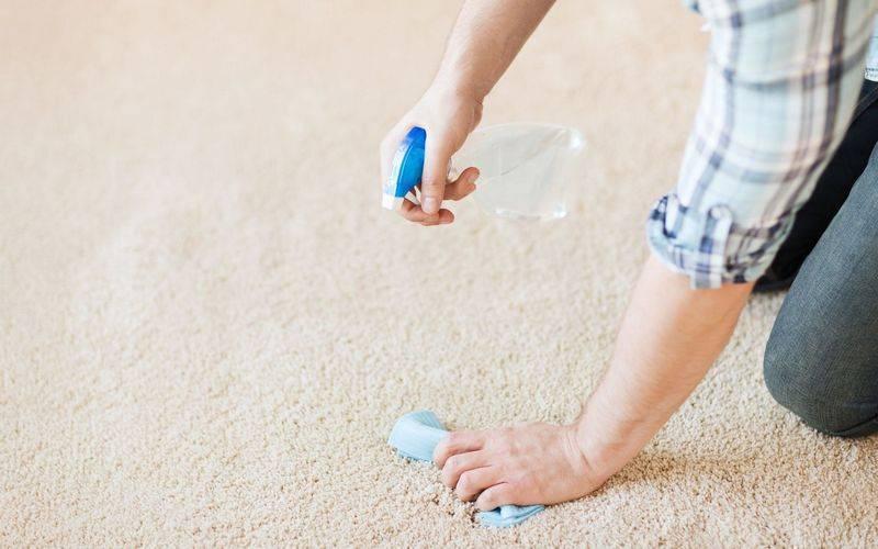 Как избавиться от запаха мочи на ковре - детские и взрослые неприятности, метки кошек и собак
