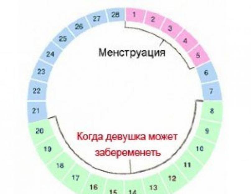 Можно ли забеременеть во время месячных? * клиника диана в санкт-петербурге