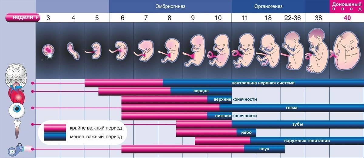 Беременность после ЭКО по неделям