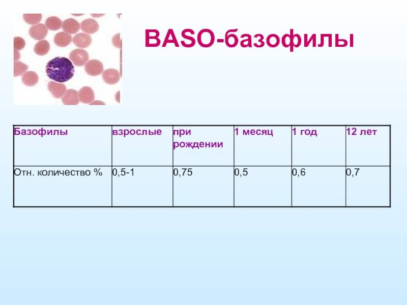 Причины повышенного уровня базофилов в крови — норма для ребенка, мужчин и женщин, как понизить