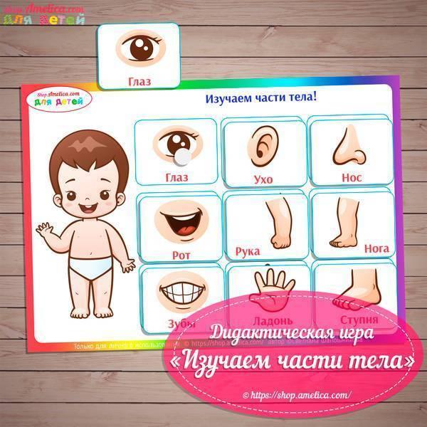 Игровые технологии по лексической теме «человек. части тела человека. кто я? какой, я?» план-конспект занятия по развитию речи (старшая группа) на тему