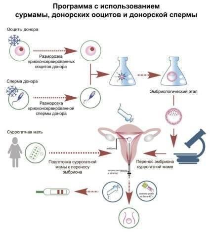Оценка качества эмбрионов в программах эко     материнство - беременность, роды, питание, воспитание