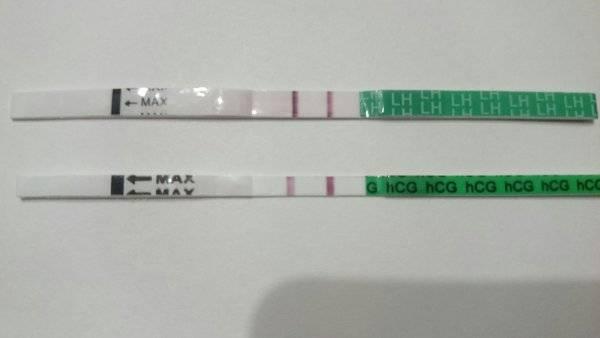 Может ли тест на беременность показать овуляцию?