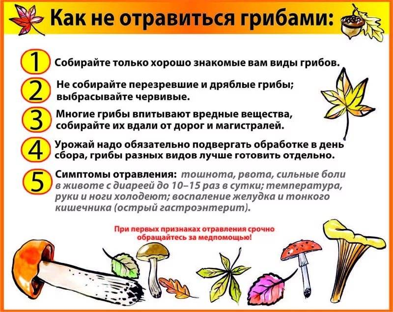Можно ли грибной суп ребенку 2 года - vosvet.ru