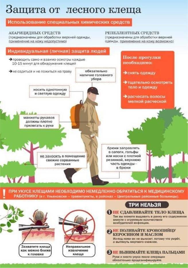 Клещ не пройдёт! обороняем садовый участок от кровососов | сад-огород: подробности | сад-огород | аиф челябинск