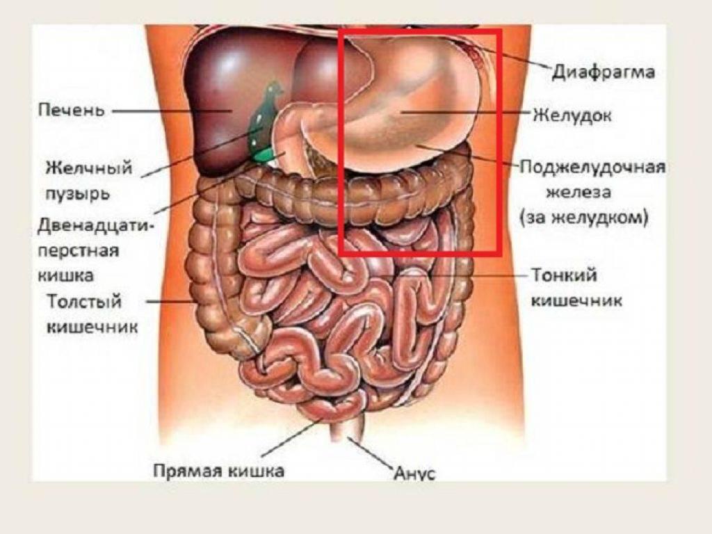 Боли в кишечнике слева при беременности