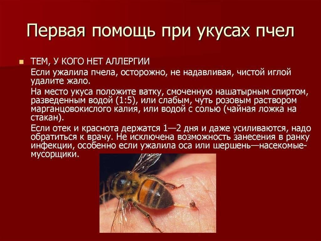 Как помочь ребенку при укусах комаров и прочих летающих тварей. рассказывает педиатр сергей бутрий
