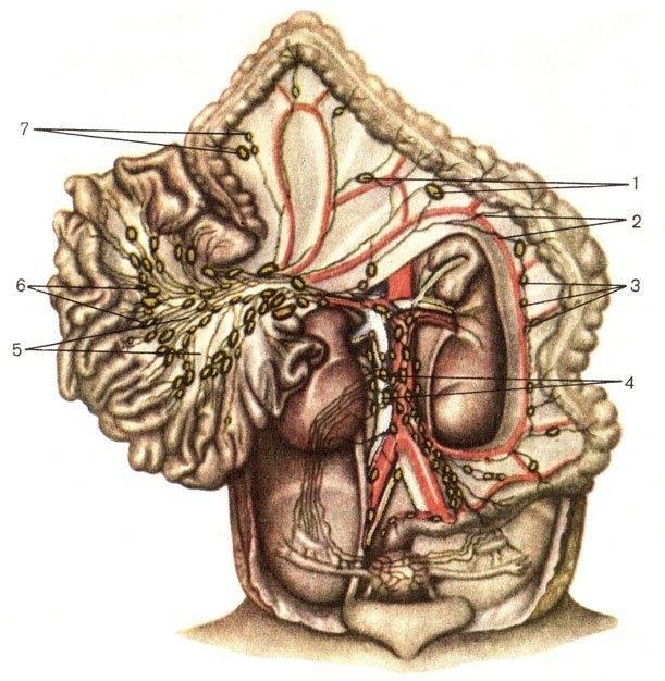 Hipec. годы жизни вместо месяцев при злокачественных опухолях брюшной полости