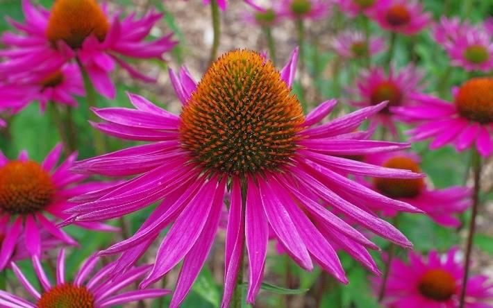 Лекарственные травы для повышения иммунитета