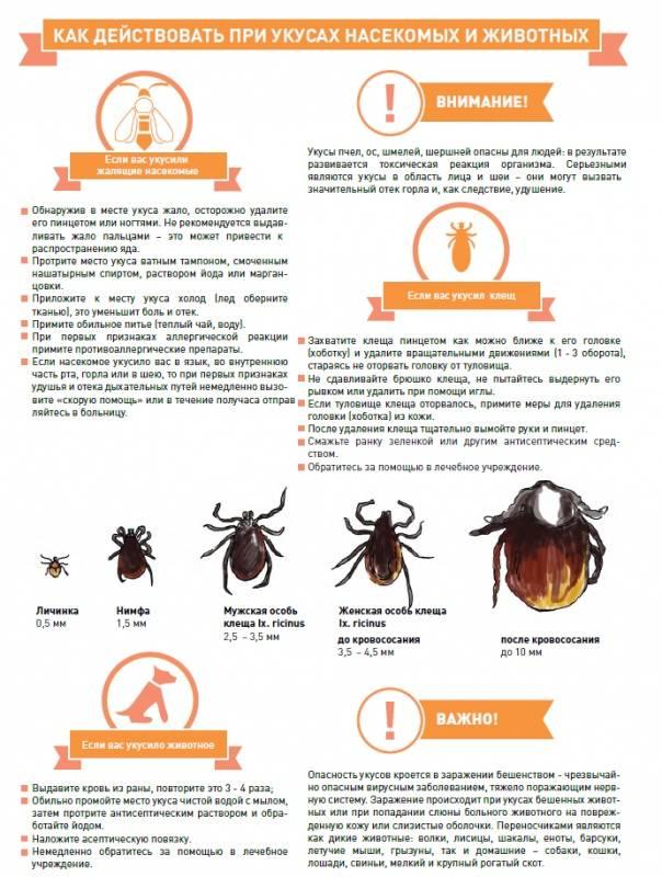 Укусы насекомых: как оказать первую помощь и когда обращаться к врачу