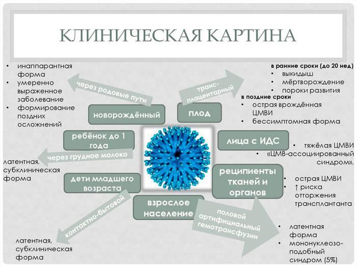 Аденовирусная инфекция (аденовирус)