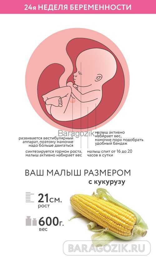 Календарь беременности. 22-я акушерская неделя