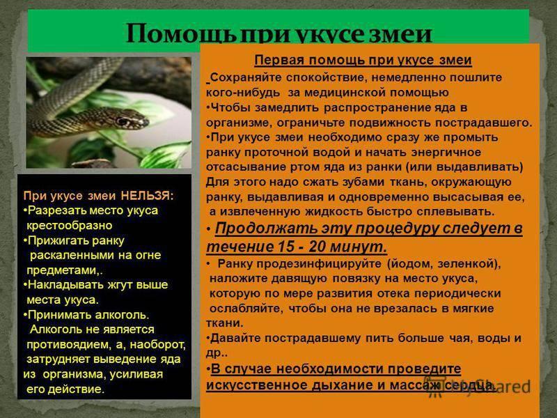 Укусы насекомых - доказательная медицина для всех