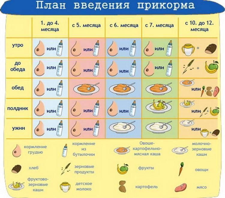 Первый прикорм при грудном вскармливании: схема и таблица. рецепты и меню.