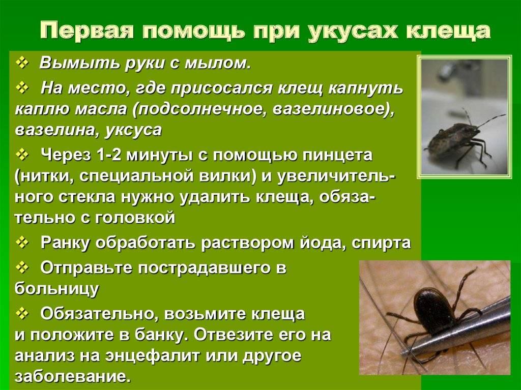 Аллергия на насекомых (инсектная аллергия) | аллергология и иммунология