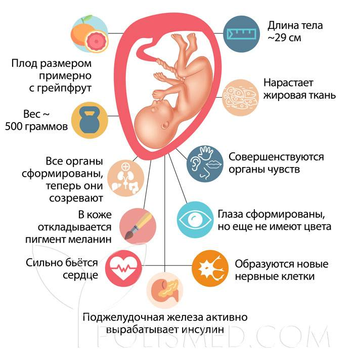 22 неделя беременности :: polismed.com