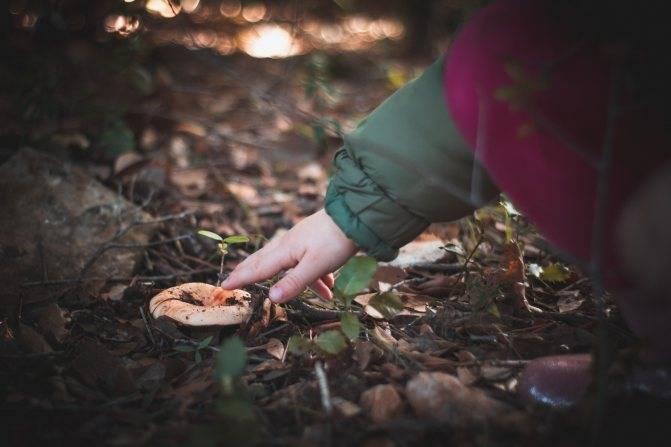 Можно ли грибы детям? мифы и правда о грибах