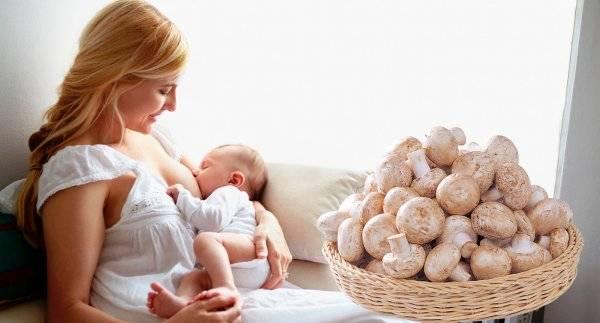 Можно ли есть шампиньоны кормящей маме