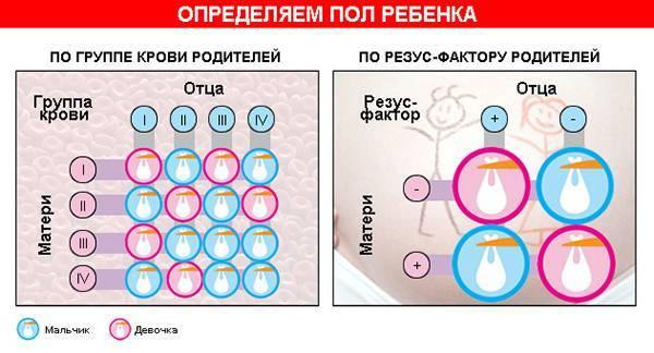 Как узнать пол ребёнка при беременности: узи и другие методы